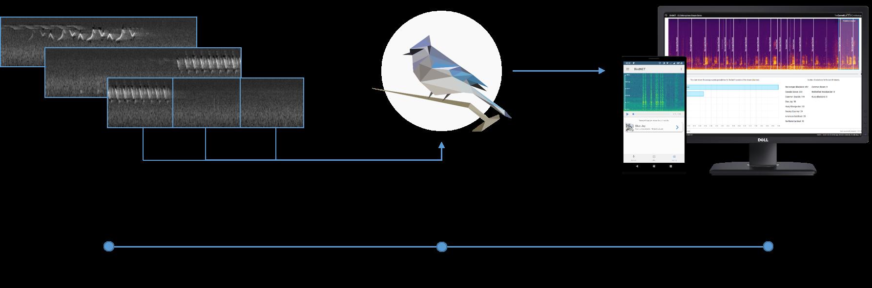 BirdNET – The easiest way to identify birds by sound